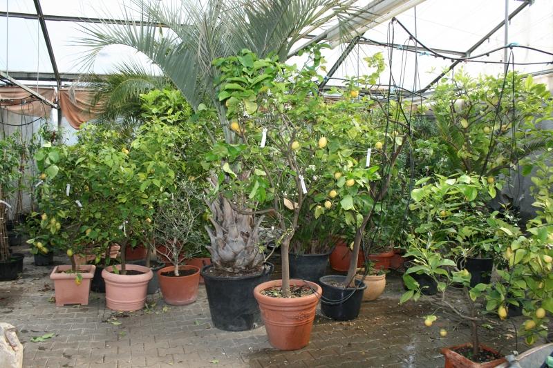 Orangerie4